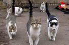 Петербуржцам советуют не гладить кошек и собак во время путешествий в теплые страны