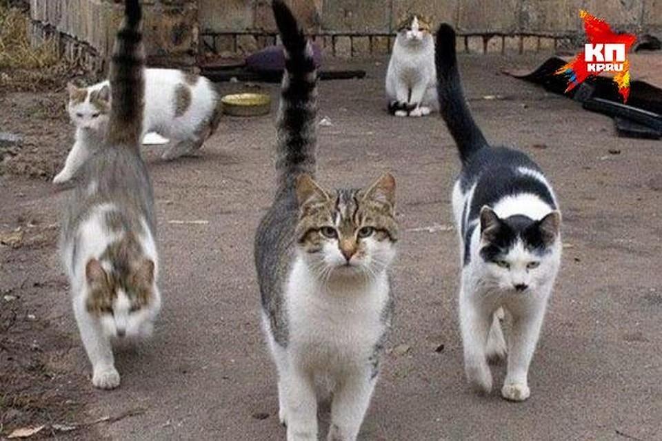 """Погладить котика лучше уже по возвращении домой. Фото: Архив """"КП"""""""