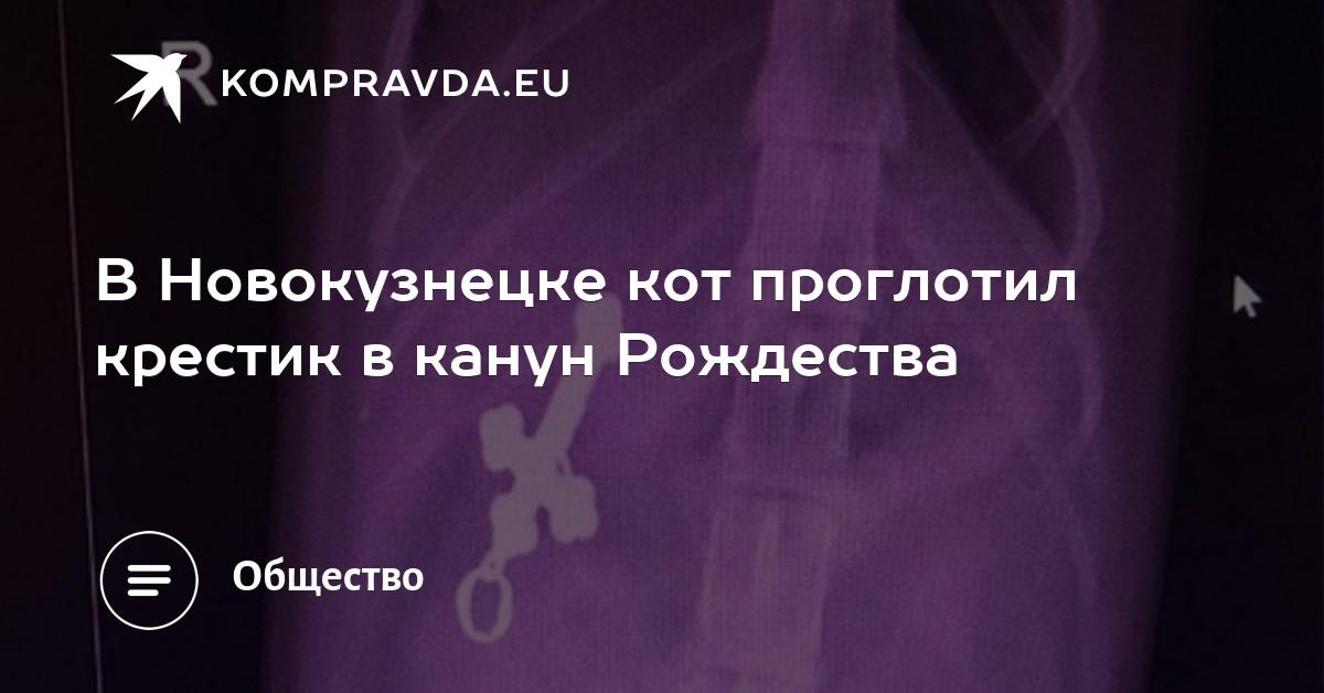 Ближе к Богу: в Новокузнецке кот проглотил крестик