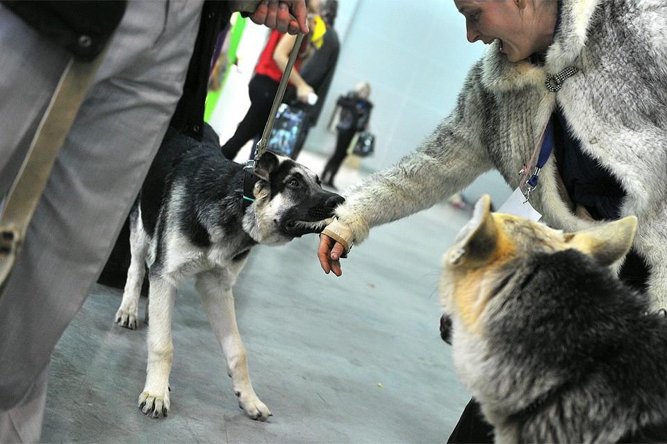 """Сценка на выставке собак """"Евразия"""" в Крокус-Экспо."""
