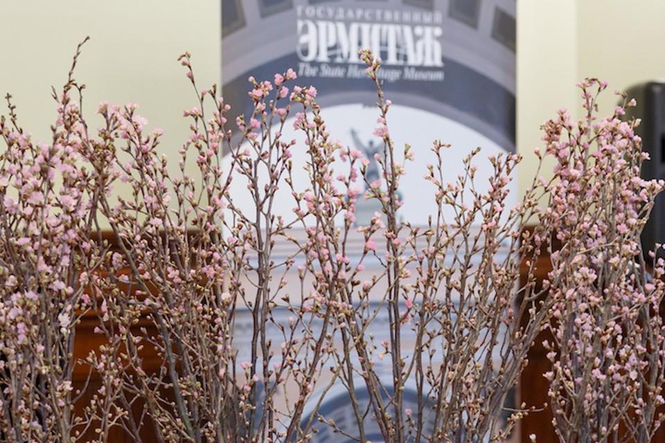 Эрмитажу подарили цветущую сакуру Фото: Эрмитаж