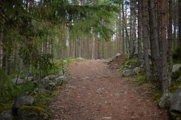 Иван Валентик: Несвоевременного обнаруженный очаг болезней приносит вред сопоставимый с лесным пожаром