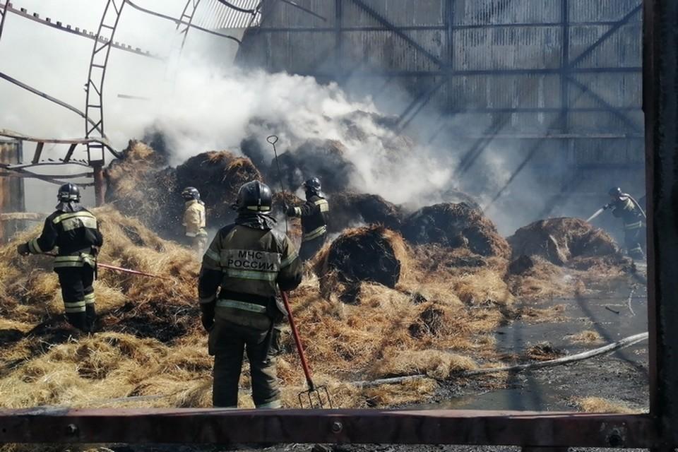 Пожар в конном клубе в Хабаровске: огонь бушевал на 800 квадратных метрах