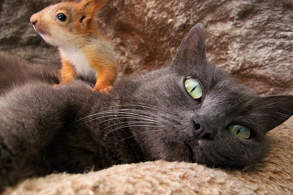 Кошка растит и воспитывает трех бельчат и четырех котят