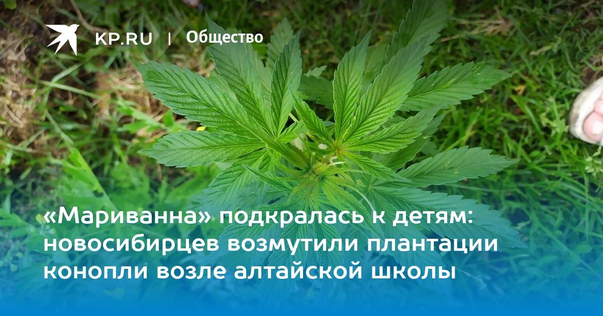 Bbc конопля вредная трава i как и где можно купить марихуану