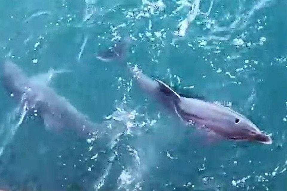 игры азартные дельфин