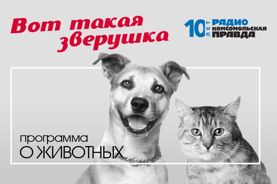 Илья Середа дает бесплатную консультацию ветеринарного врача