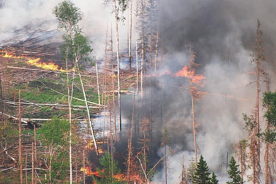 На территории Красноярского края горит почти 700 тысяч гектаров леса Фото: Виктор ЧАВАЙН