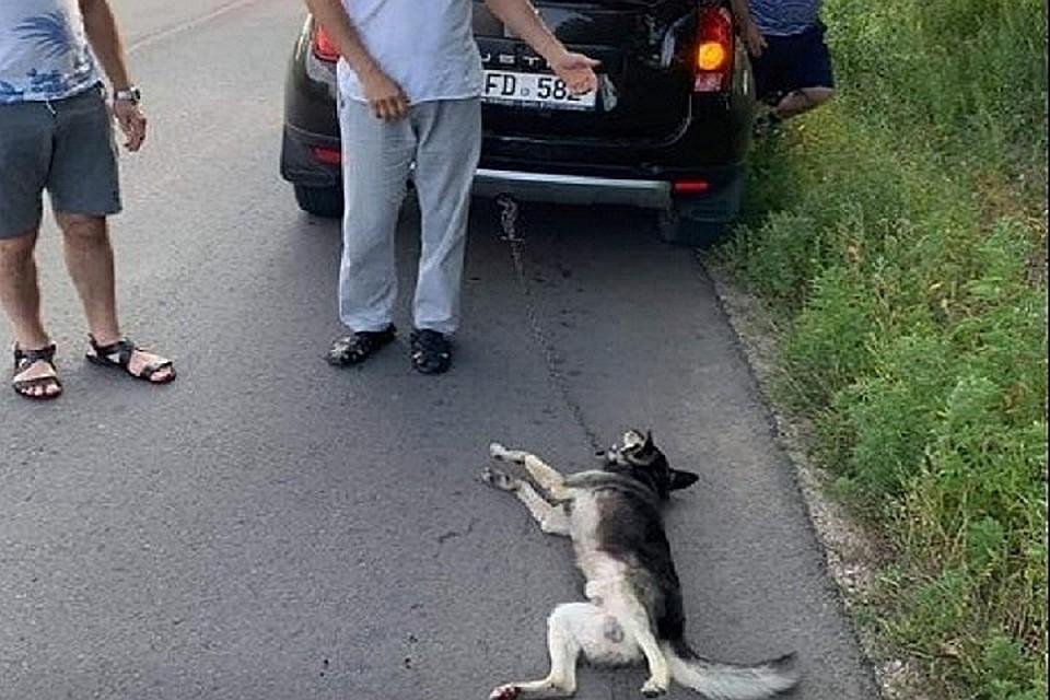 Молдавский священник, волочивший cобаку по асфальту: «Защитники животных — это секта, которая любит собак больше, чем детей!»