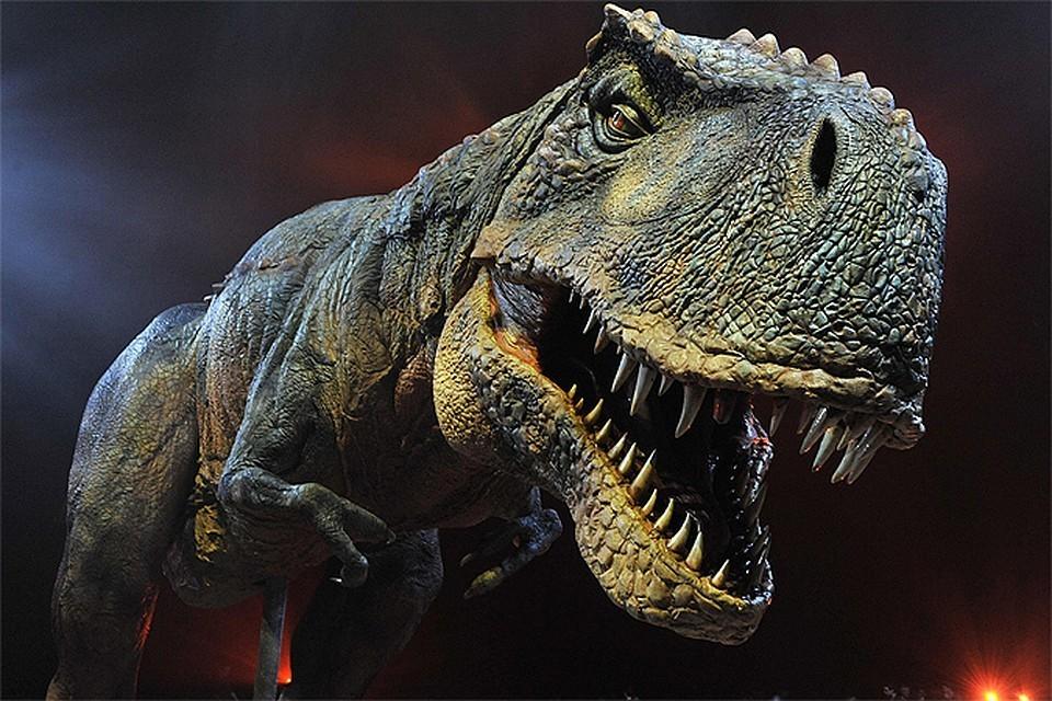 Вид динозавров, отложивших яйца, пока не определен