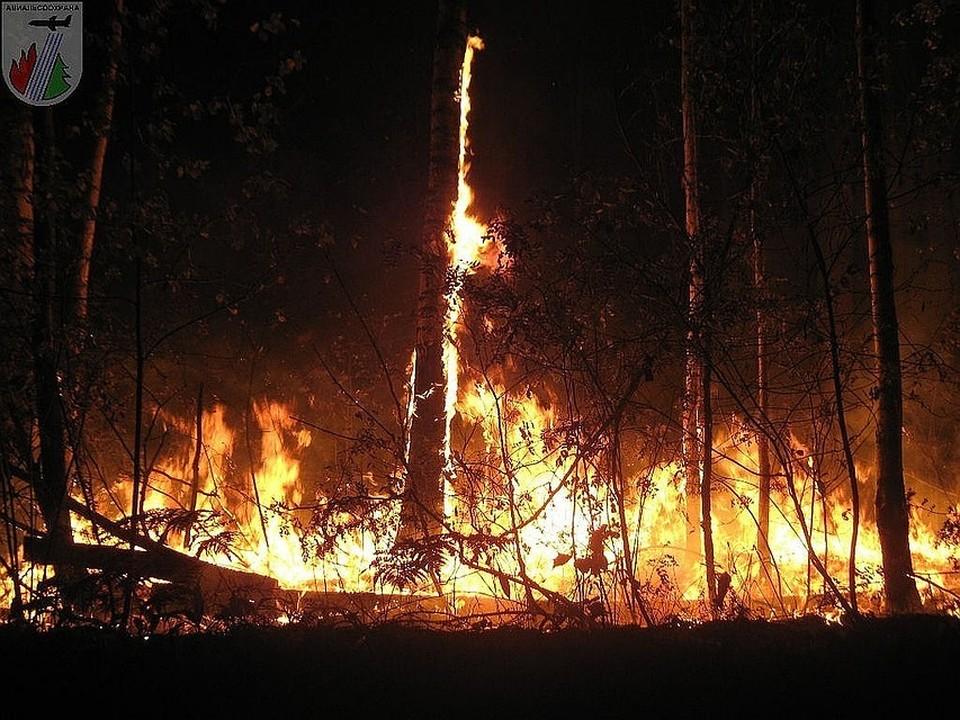 Площадь лесных пожаров в Красноярском крае за сутки увеличилась на десятки тысяч гектаров. Фото: Лесопожарный центр