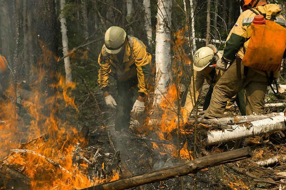 Генпрокуратура: на местах лесных пожаров в Иркутской области обнаружили незаконные рубки. Фото: пресс-служба Авиалесоохраны.
