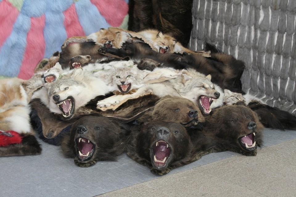 В Усть-Вымском районе пока нет желающих охотиться на медведей