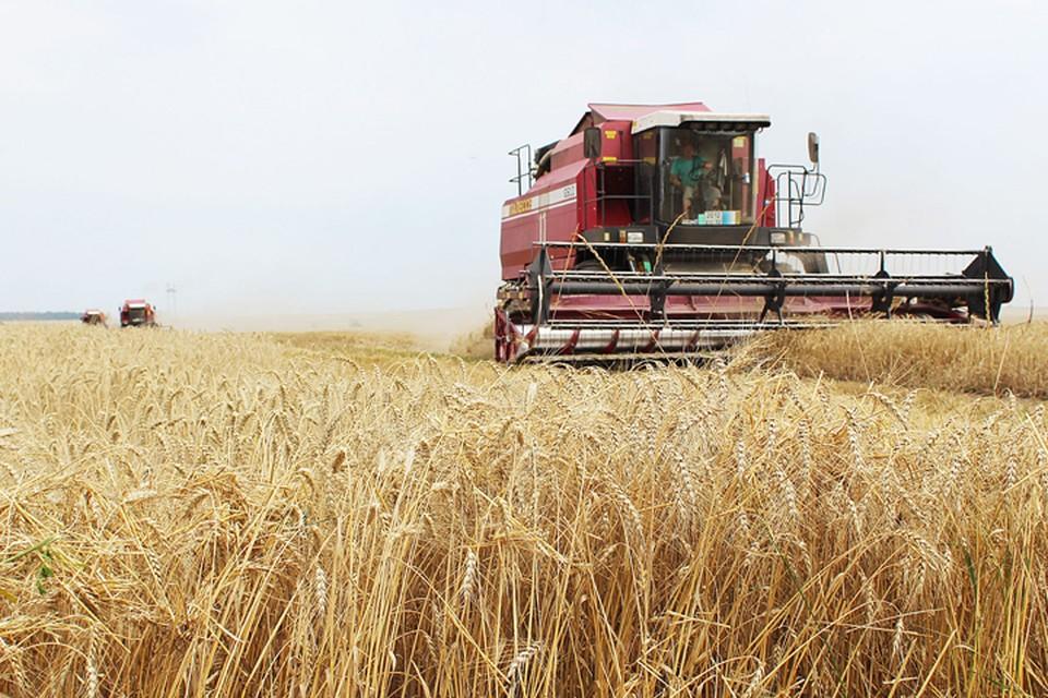Эксперты отметили рост индекса производства сельскохозяйственной продукции.