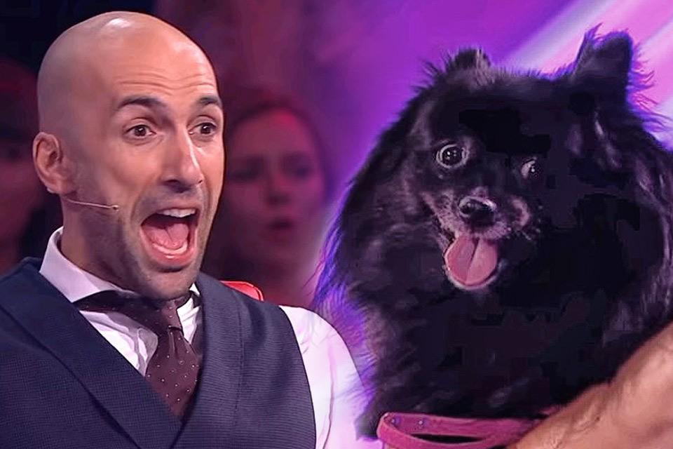 Сюжет программы «Удивительные люди» про собачку-гипнотизера стал хитом Интернета почти через год после выхода в эфир.