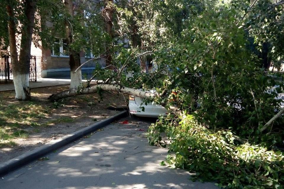 Упавшее дерево повредило иномарку.