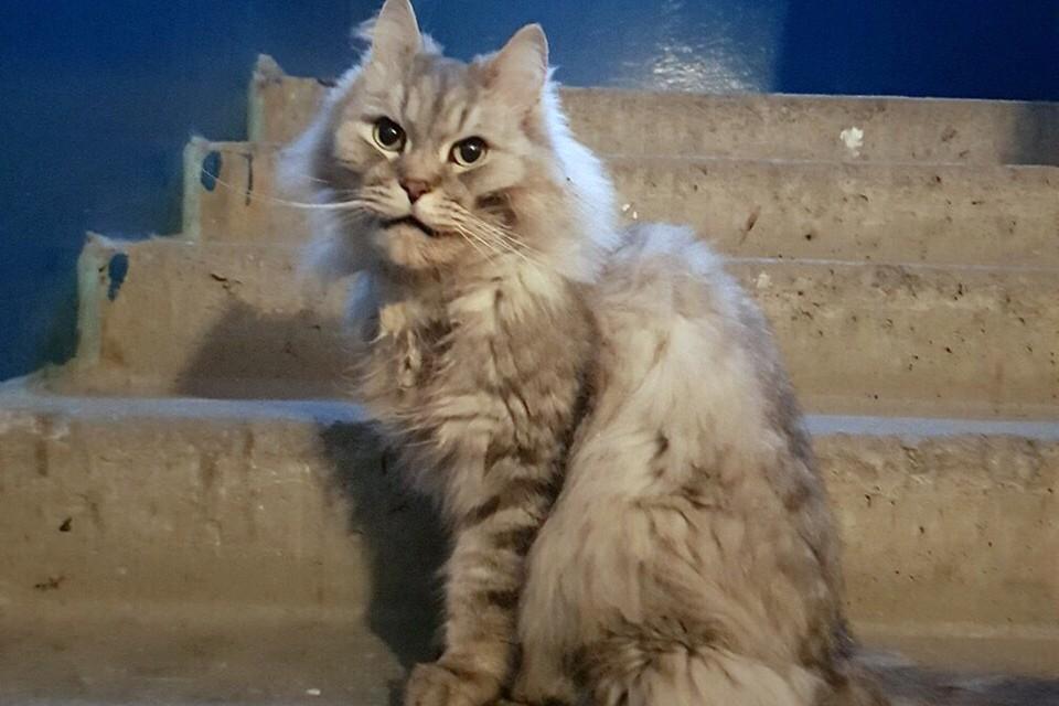 У кота, на которого вызвали отлова, оказался сильный ангел-хранитель. Фото: Юлианна Жукова