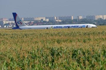 """МАК пришел к выводу: в самолет """"Уральских авиалиний"""", севший в кукурузном поле, попали птицы"""