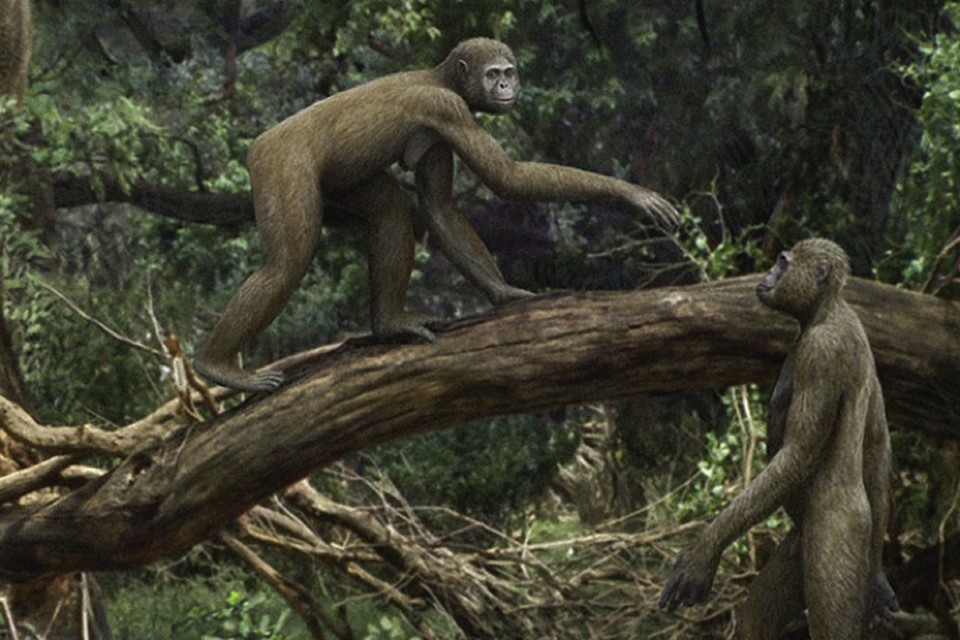 Наши далекие предки стали слезать с деревьев гораздо раньше, чем принято было считать.