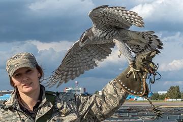 Воздушная охрана «Домодедово»: Ястребы бдят, чтобы птицы не таранили самолеты