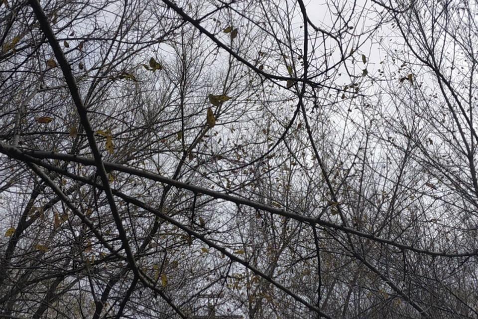Погода в Хабаровске на 5 ноября 2019 года: днем до -1, небольшой снег
