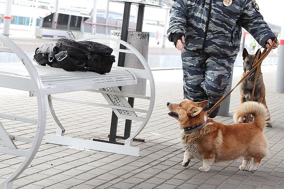 Единственный в России корги-полицейский честно ответил на вопросы подписчиков
