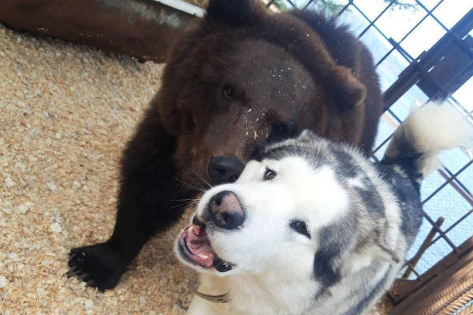 Ну не мило ли? Маня и Барон не расстаются ни на минуту! Фото: предоставлено Анной Трофимовой.