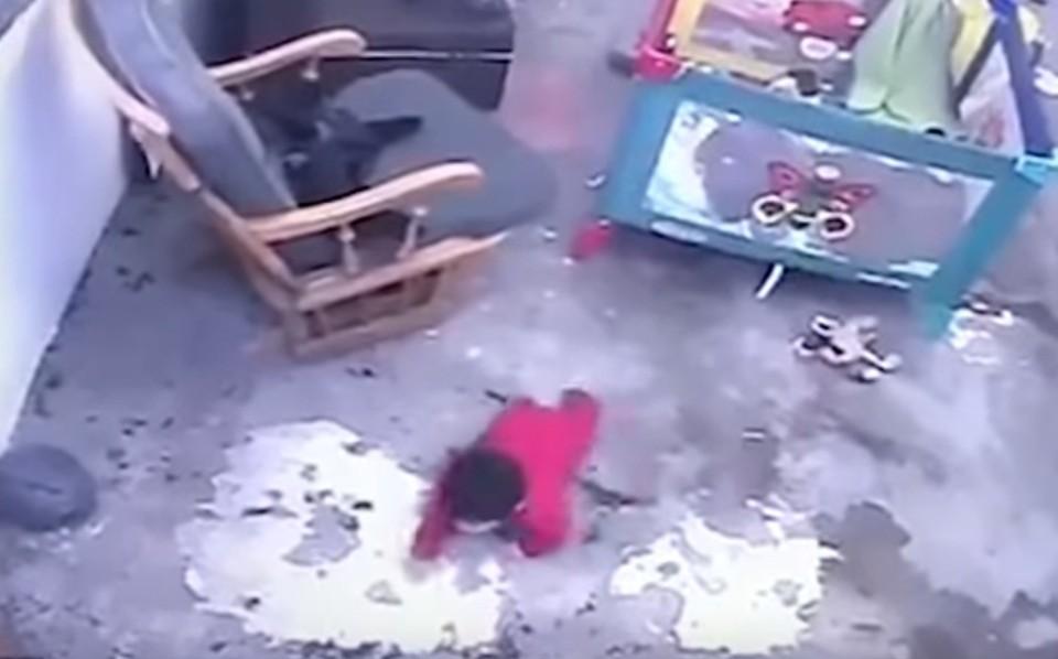 Кошка бросилась к лестнице, когда увидела, что мальчик туда пополз