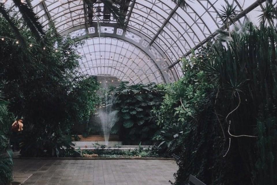 Растения могли погибнуть из-за прорыва трубы. Фото: vk.com/orangeryspb.