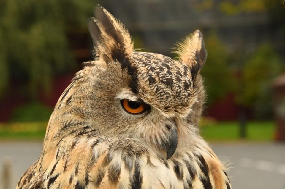 Репер надеется, что наступят времена, когда птицы заживут «как люди»