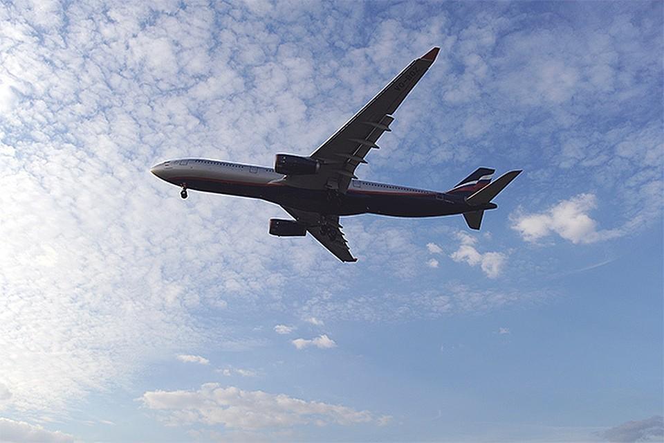 В Минтрансе подготовят предложения по изменению ряда правил авиаперевозки животных