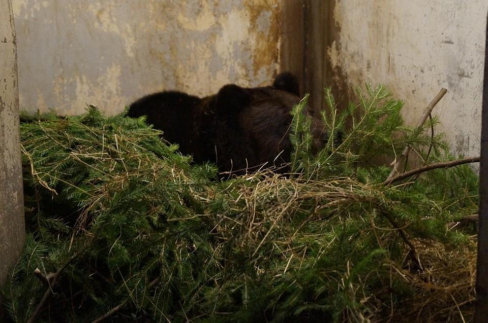 Медведи нашли марихуану приколы и марихуана