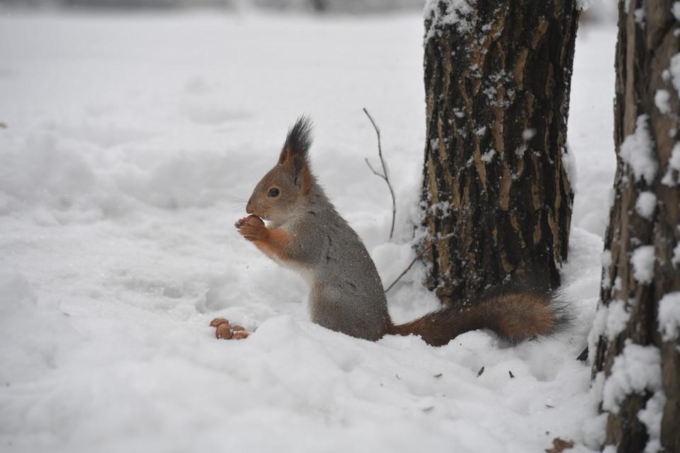 Порезвиться на снегу можно будет до выходных.
