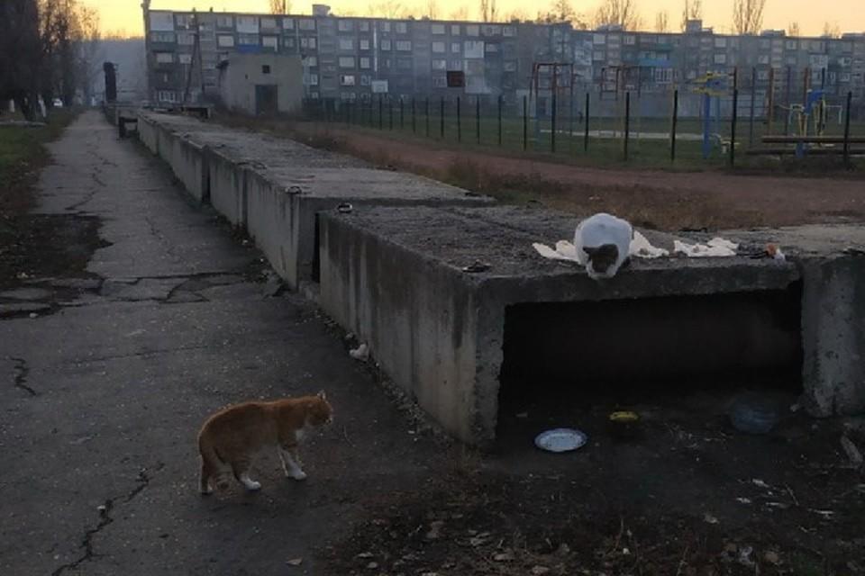 Чаще всего жертвами злодея становятся коты и собаки в микрорайоне «Западный», которые в холодное время греются на теплотрассе. Фото: vk.com/typical_myrnohrad