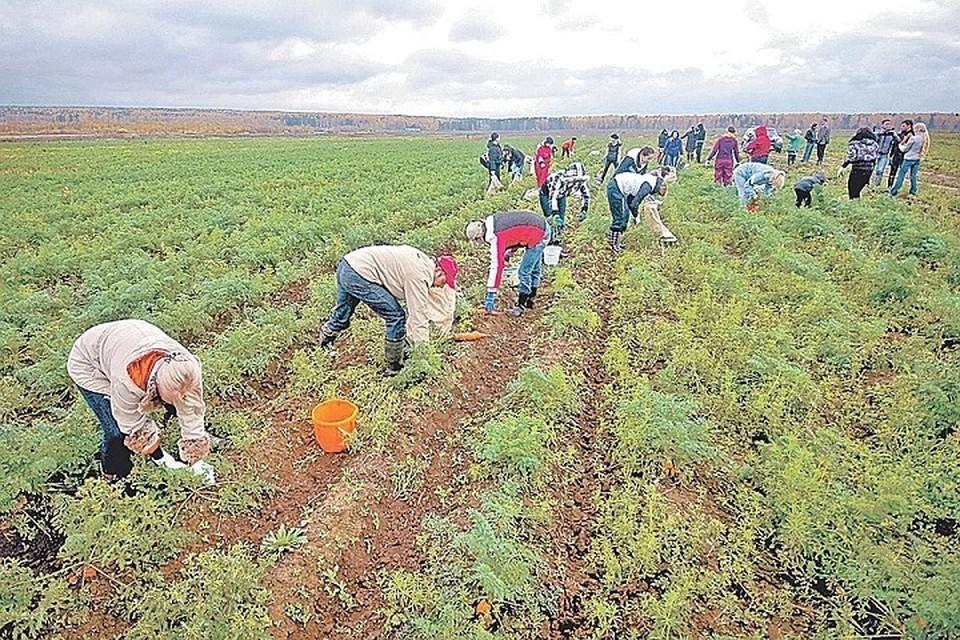 Чтобы работать на современном уровне сейчас сельхозникам нужно постоянно учиться
