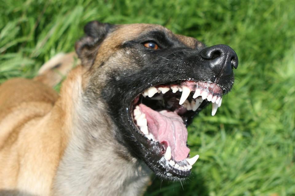 Уфимцев напугали новость о собаках людоедах