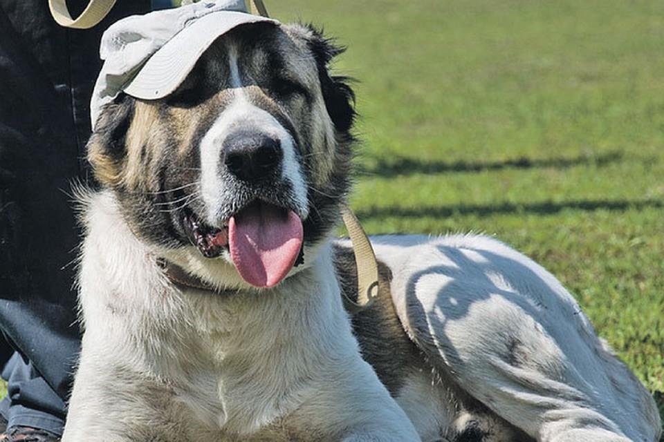 """""""Вплоть до летального исхода"""": В Роспотребнадзоре рассказали о передающемся от собак опасном заболевании"""