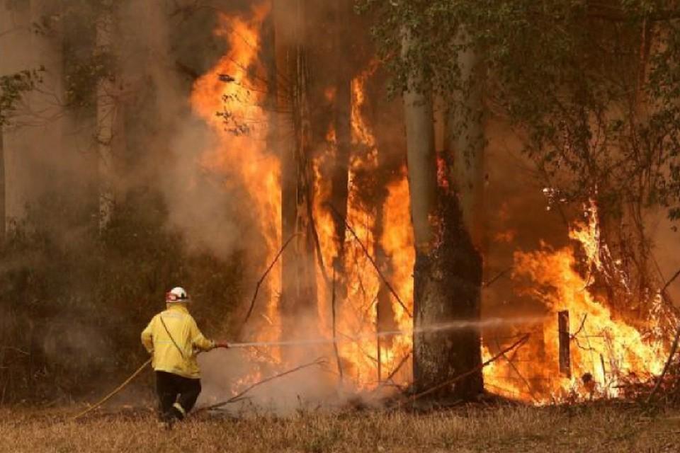 На востоке Австралии из-за лесных пожаров заблокированы тысячи людей