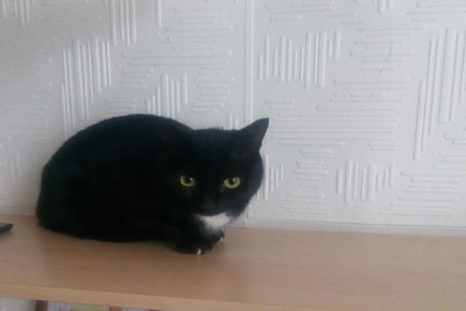 Буквально вчера в семье Александра было 9 кошек, а сегодня уже 10. Фото: Счастливый хвост. Помощь кошкам. Пермь
