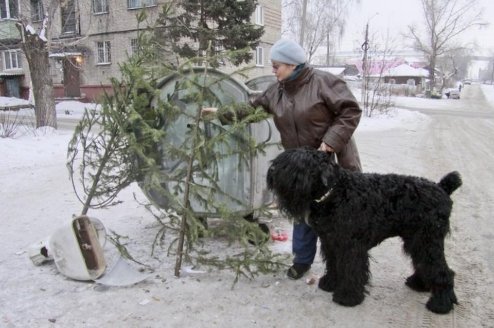 Если выбросить елку на помойку, то получится двойной удар по природе
