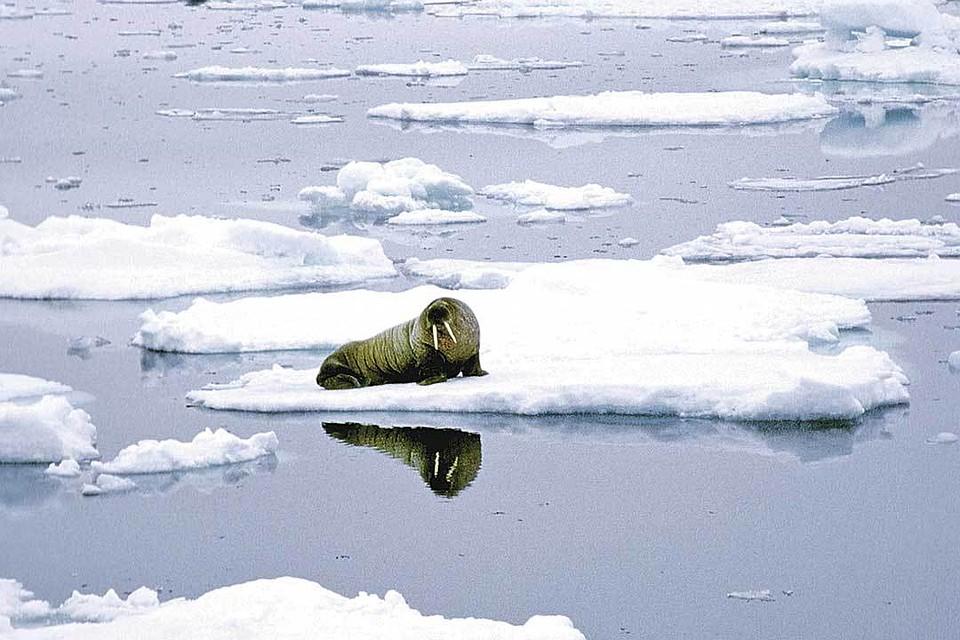 - Караул! Льды тают! - кричат зеленые. Но в этом виноват не человек, а природа.