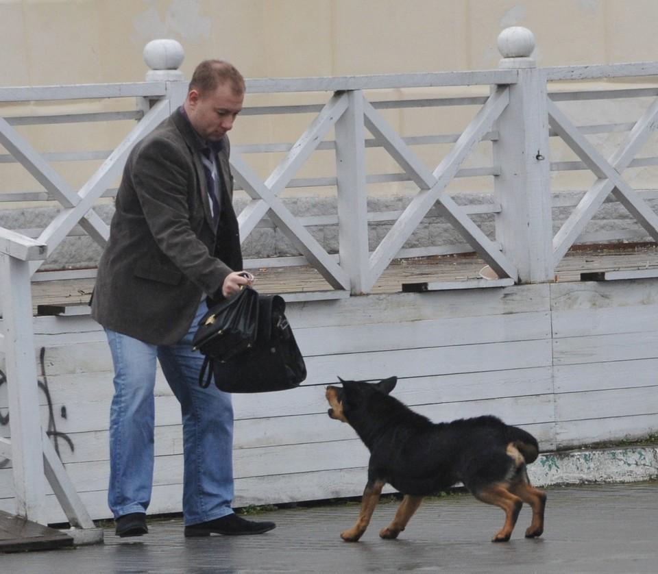 Собаки не всегда доброжелательны к людям.