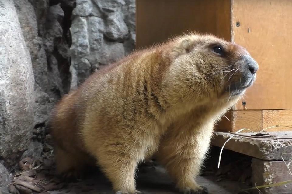 В Ленинградском зоопарке проснулись сурки