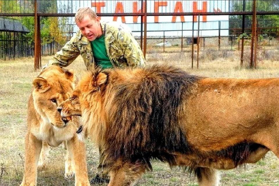 Олег Зубков умеет обращаться со львами не хуже дрессировщика. Фото: Блог olegzubkov