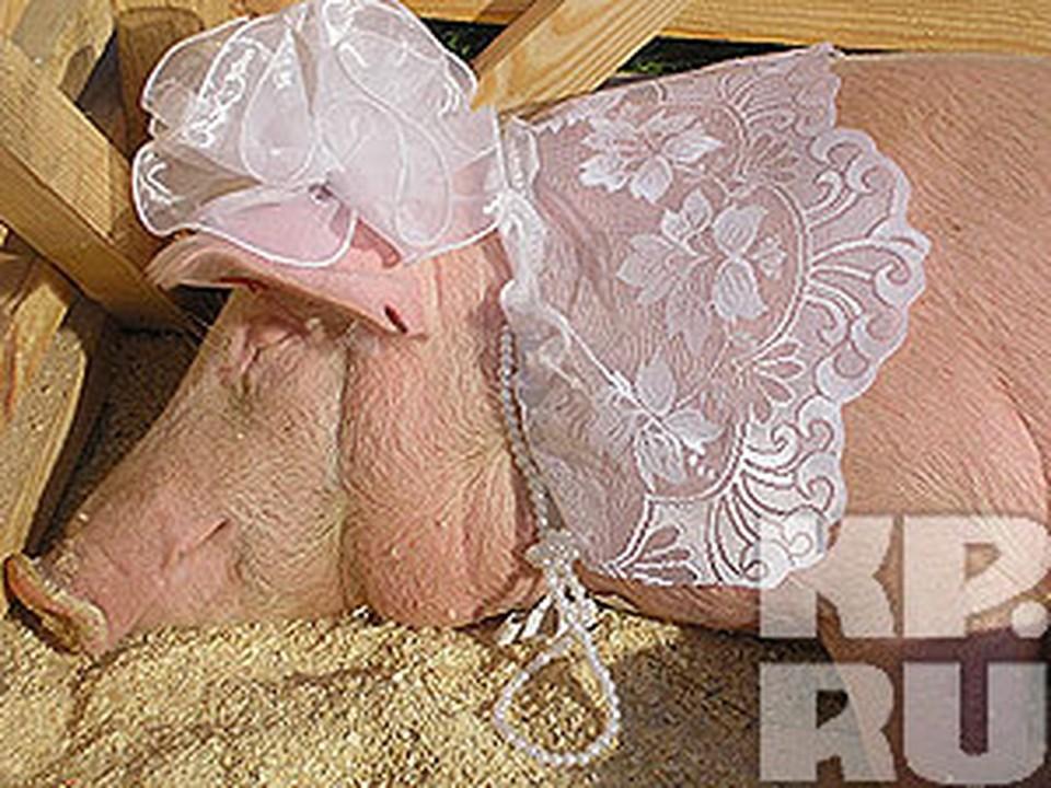 Свинки свиным гриппом не болеют