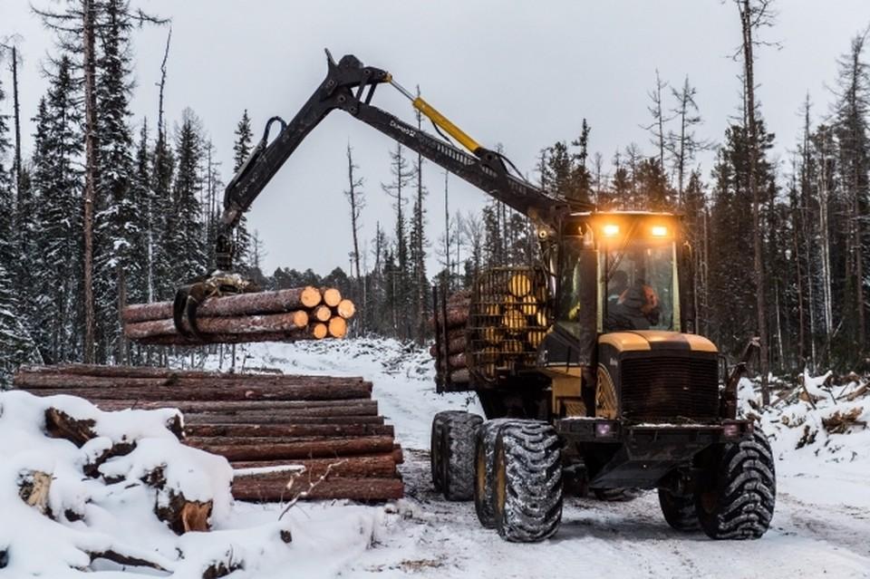 Заготовка древесины приносила непоправимый вред природе