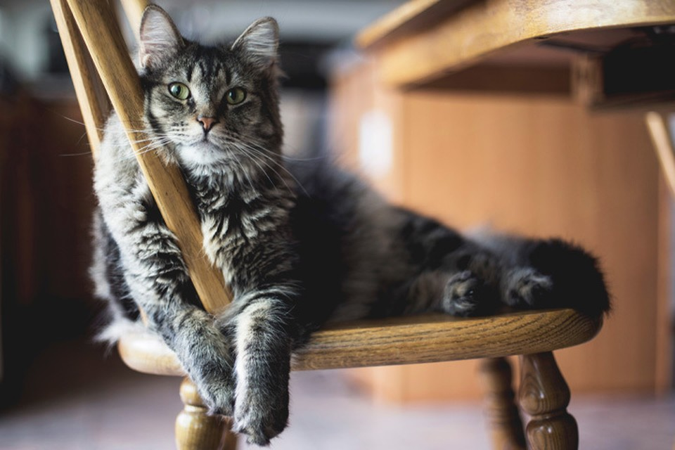 Участвуй в фотоконкурсе «Главный кот года - 2020» и выигрывай призы. Фото: unsplash.com.