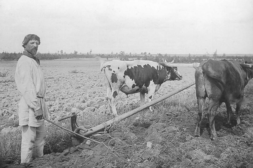 Деревни в разгар эпидемий обпахивали на волах. Фото: Книга «Беларусы на фотаздымках Ісака Сербава». Снимок носит иллюстративный характер