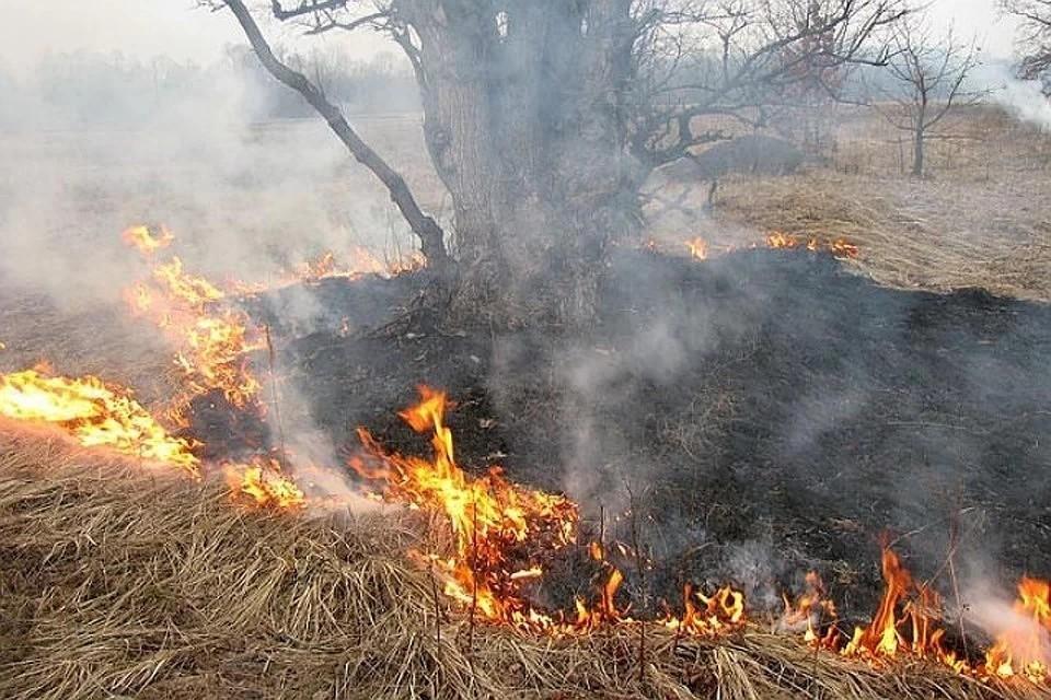Только с начала этого сезона в Тверской области произошло более 300 пала на площади 800 Га
