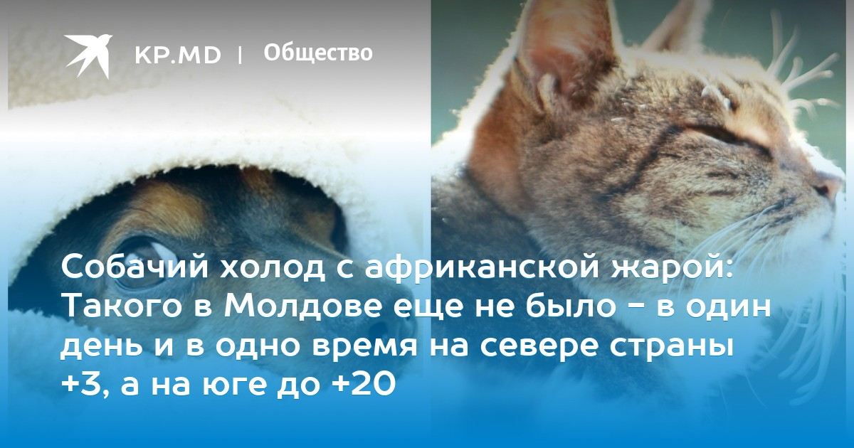 Собачий холод с африканской жарой: Такого в Молдове еще не было